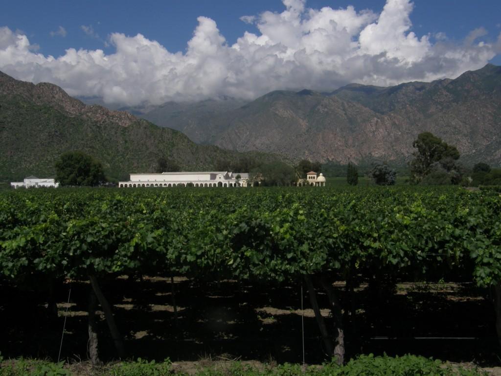 Weinregion Cafayate, Salta - Herkunft des Altoandino Malbec